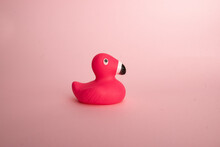 Pink Rubber Duck Flamingo On Background