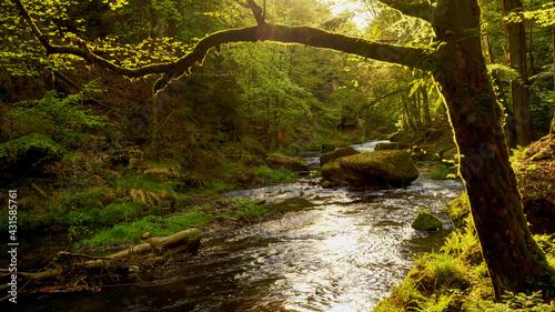 Czeska Szwajcaria górska rzeka Kamenice