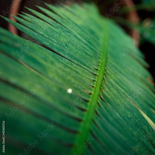 liść palmy - fototapety na wymiar