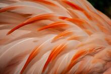 Close Up Of Pink Flamingo