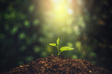 Small Tree. Young Plant Growing With Sunlight In The  Morning. Earth Day Concept. Seedling Growing.