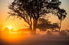 Sunrise In Africa, Botswana