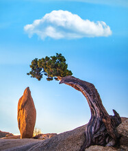 Tree And Balancing Rock In Joshua Tree National Park, California