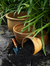Terracotta Plant Pots In Garden Setting