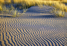 Grasses Growing On Rippled Sand