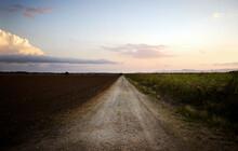Road Between Sugarcane Fields