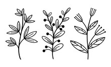 Set Of Vector Elements Of Branches With Leaves And Herbs. Hand-drawn Plants. Vintage Botanical Illustrations With Berries And Inflorescences. Isolated Black Outline, Doodle.