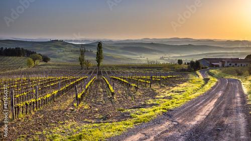 Naklejka premium Vineyard in foggy hills