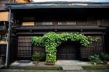 Traditional Japanese Building Architecture With Green Plant In Historical Japanese Old Town Of Takayama, Gifu, Japan.