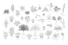 Set Of Various Monochrome Tropical House Plants In Planters. Black Line Art. Stock Vector Illustration.