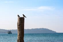 Twin Bird On Timber In Sea