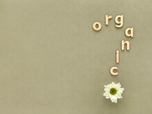 Word Organic With Wooden Letters In Form Of Question Mark, Green Background, White Chrysanthemum