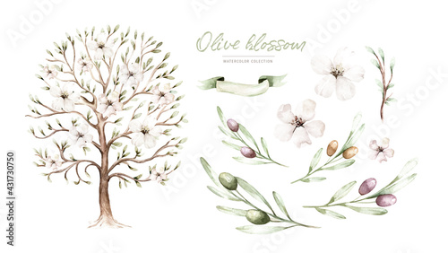 Watercolor Genealogical Family tree. Watercolor children's tree botanical season isolated illustration. olive, oak and cypress. Green forest ecology branch and leaves. - fototapety na wymiar