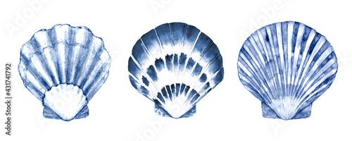 Fotografia Seashell set watercolor illustration
