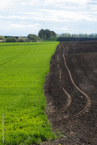 spring field with winter wheat and plowed field