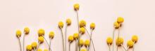 Craspedia Globosa Dry Flowers