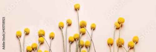 Canvastavla Craspedia globosa dry flowers