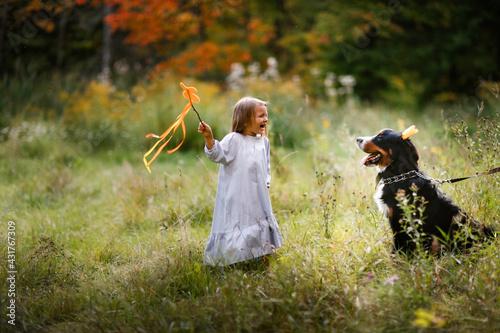 Carta da parati Cute Caucasian girl child and a Bernese Mountain Dog breed in a crown in a park