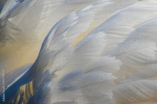 Tablou Canvas bird of paradise