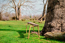 Small, Vintage And Abandoned Sitting Bench Next To The Huge Pine Tree Body And On Green Grass With Floodplain In Karacabey Bursa Turkey With Natural And Rural Background.