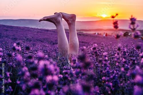 Fototapeta Selective focus. Slender ballerina girl legs in lavender bushes, warm sunset light. Bushes of purple lavender in blossom, aromatic flowers at lavender fields of the French Provence near Valensole obraz