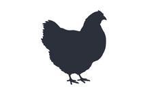 Hen, Chicken. Black White Silhouette Chicken, Hen