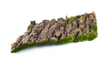 Mossy Rotten Tree, Nature Flora, Damp Moss, Forest Plant, Isolated Natural Object, Design Element,