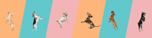 Art Collage Made Of Funny Flying Dogs Different Breeds Jumping High On Multicolored Studio Background.