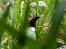 Black Slug On The Grass, Close-up