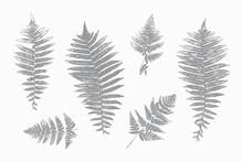 Natural Fern Leaf Print Silhouettes. Stamp Leaves Vector Set. Textured Forest Summer Plants Imprint For Floral Design.
