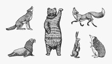 Forest Animals. Bear Grizzly, Wolf And Red Fox, Hare And Hedgehog And Seal. Beasts Stand On Two Paws. Vector Engraved Hand Drawn Vintage Sketch For Label Or Poster.