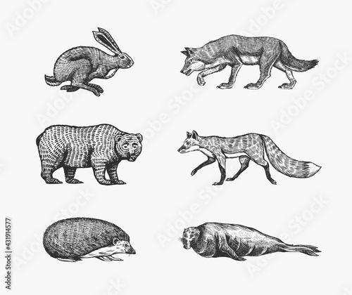 Forest animals. Bear Grizzly, Wolf and red Fox, Hare and Hedgehog and Seal. Jumping beasts. Vector Engraved hand drawn Vintage sketch for label or poster. - fototapety na wymiar