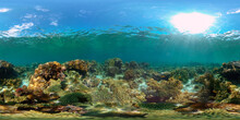 Tropical Coral Reef Seascape With Fishes, Hard And Soft Corals. Philippines. 360 Panorama VR