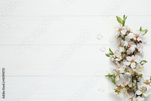 Blossoming spring tree branches as border on white wooden background, flat lay. Space for text