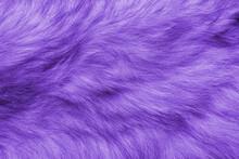 Colorful Purple Background Fur Texture