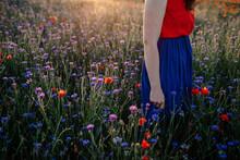 Woman Standing Amidst Flowers In Poppy Field