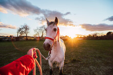 Male Animal Trainer Training Horse While Standing At Ranch During Sunset