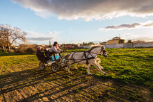 Animal Trainers Guiding Horse Path While Sitting Behind In Carriage On Ranch