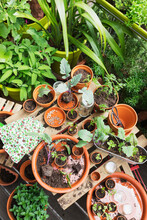Herbs And Vegetables Cultivated On Balcony Garden