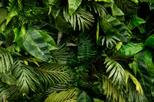 Background From Green Tropical Leafs.Different Foliage Plants On Dark Bcakdrop.Good As Advert Banner With Copy Space.