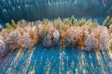Germany, Bavaria, Aerial View Of Grove In Autumn