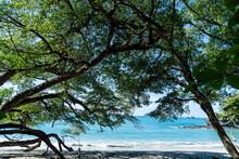 Costa Rica, Jaco, Blue Sea Seen Through Trees Growing On Sandy Beach