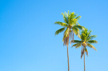 Two Palm Trees Against A Blue Sky On A Sunny Day