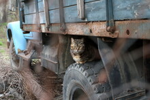 A Stray Cat Sitting On The Wheel Of An Idle Truck