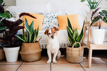 Dog Sitting By Plant Decoration At Home