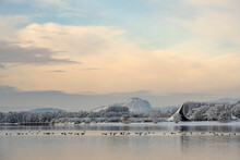 Silhouettes Of Birds Swimming In Lake Constance With Hohentwiel Volcano In Distant Background