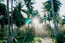 Palm Trees At Sunset, Siargao Island, Philippines