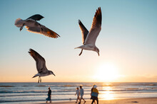 Seagulls Flying At Siesta Key Beach Against Sky During Sunset