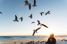 Seagulls Flying Over Mid Adult Man Against Sky During Sunset