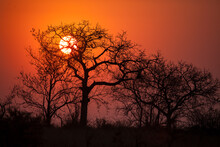 The Sunset Through A Leafless Marula Tree In The Mjejane Game Reserve, Which Is Part Of Kruger National Park In South Africa.